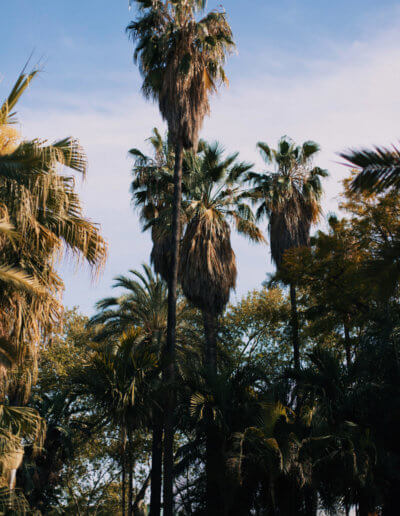 malaga-palm-trees-oasis-hostel-backpackers